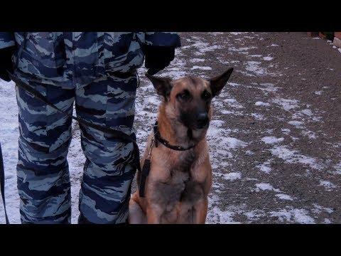 Служебная собака помогла шадринским полицейским найти наркотики