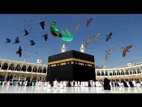 Khana Kaaba Ma Prinday Tawyaf Kar Rahay Makkah Madina Saudi Arabia Miracle In Khana Kaaba 2020