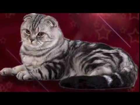 Кошки, сайт о кошках Мурлыка
