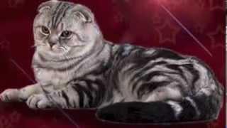 Коты для вязок / Вязки кошек