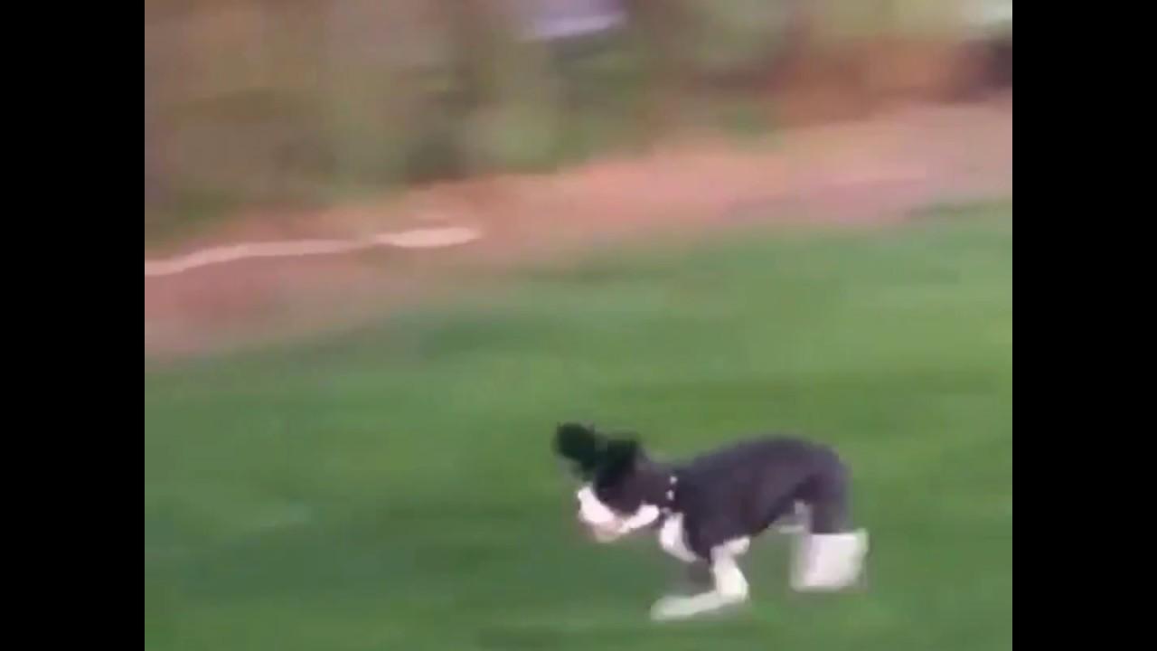 maxresdefault funny meme flying dog youtube