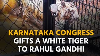Rahul Gandhi Gets White Tiger 'Arjuna' On His 51st Birthday By Karnataka Youth Congress