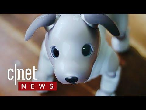 Sony Aibo robot dog returns with advanced AI (CNET News)