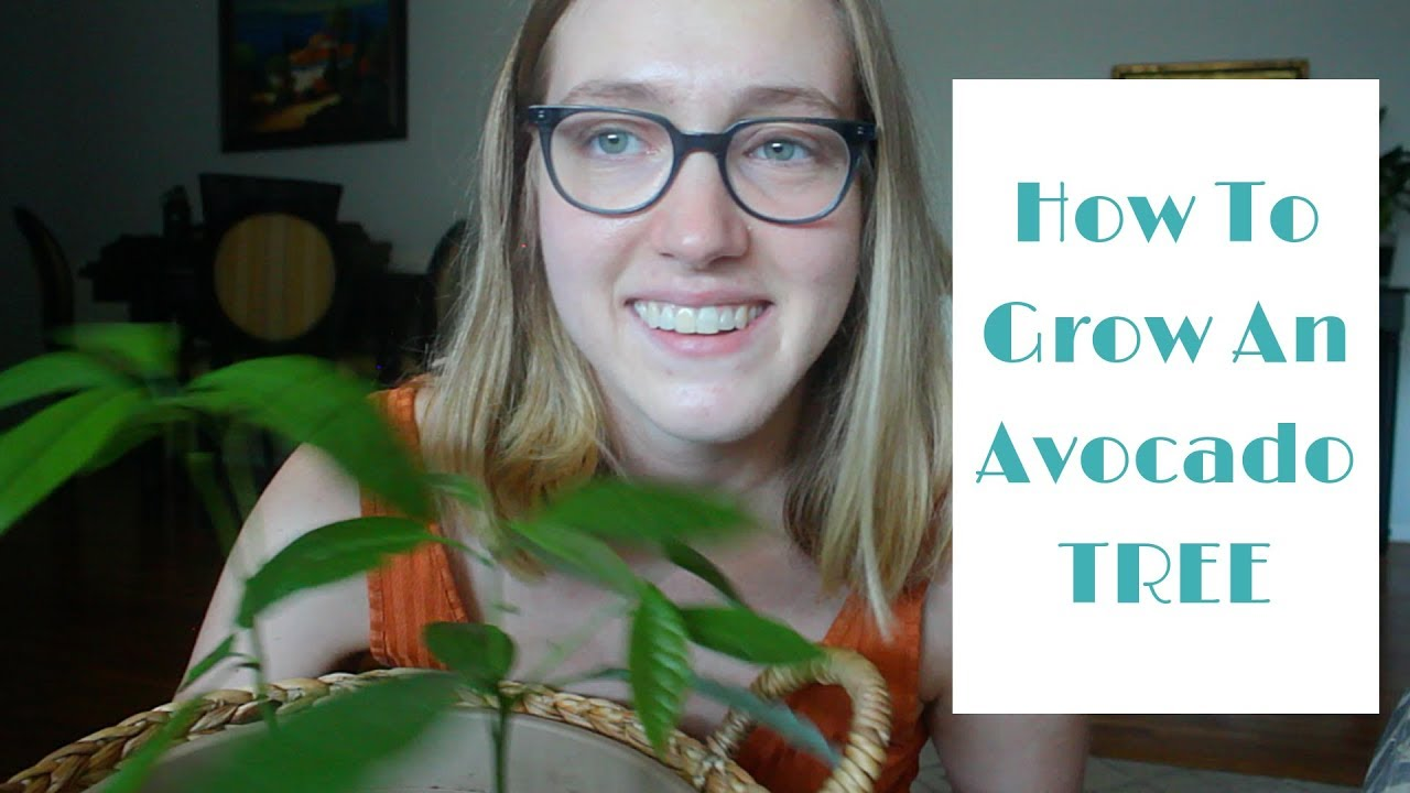 How To Grow An Avocado Tree! | Care Tips