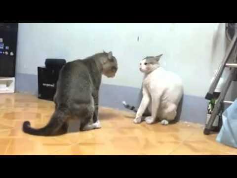 Pelea de gatos 3D