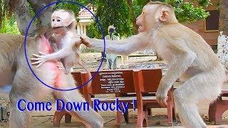 Come Down Rocky ! No No Sister Rozana Do Not Drag Me Down !