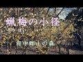 府中市郷土の森 「蝋梅(ロウバイ)の小径」 の動画、YouTube動画。