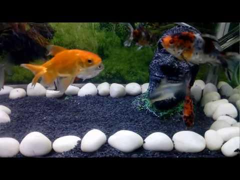 How To Clean A Fish Tank Hindi