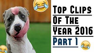 The Best Fails Of 2016 | Part 1