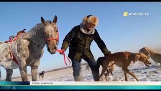 По Центральной Азии №3. Степные борзые Центральной Азии