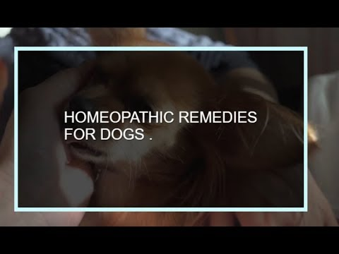 Homeopathic Remedies For #Dogs