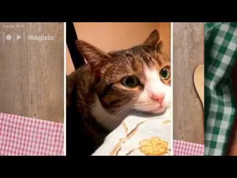 Store Cat Food vs Homemade***