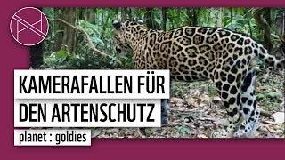 WWF Weltweit - Ecuador: Kamerafallen für den Naturschutz