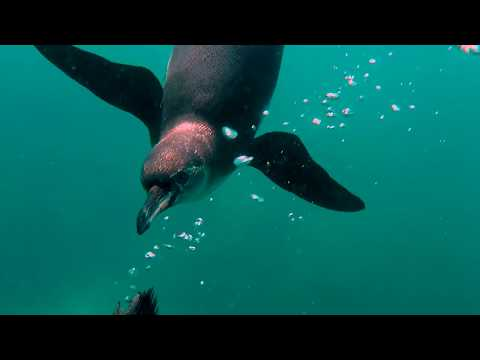 Experience the Galapagos on the Origin - Northern Islands