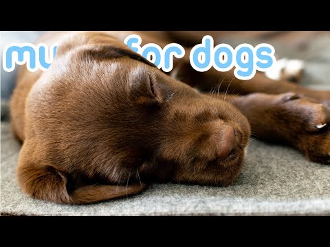 8 HOURS of Relaxing Music for Anxious Dogs! Helped 10 Million Dogs!
