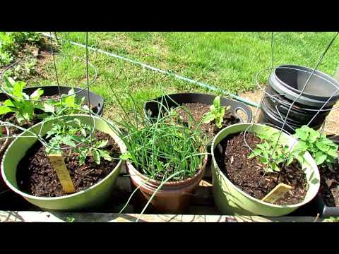 Incroyable Gardening 101 Ep7: Introduction To Container Gardening ...