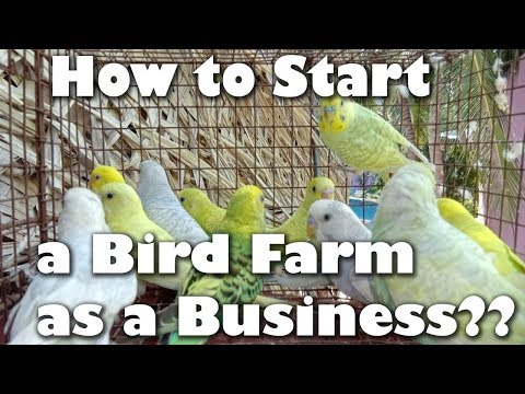 How Start A Business From Birds.......