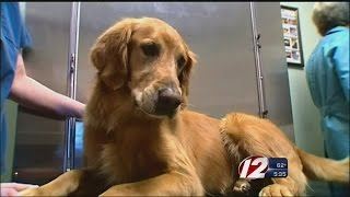 $500k grant to benefit pets and state animal programs