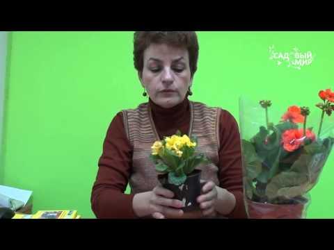Подарок к 8 Марта   Как ухаживать за цветами в горшке