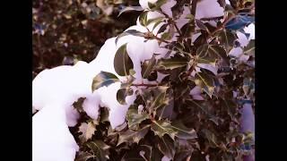 Escenas de nieve, invierno en Laspaúles (Camping Laspaúles)