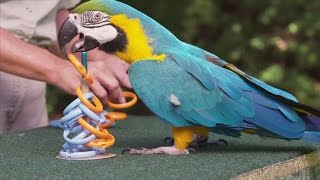 Clever parrot sets new Guinness World Record