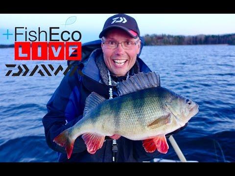 LIVEfishing with Kristian Keskitalo Team Daiwa!