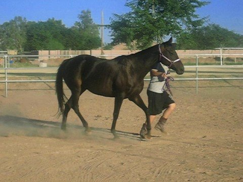Sassy being led around trotting. - YouTube