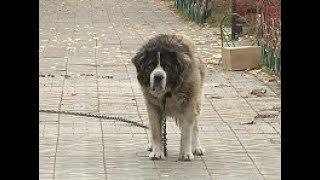 В Улан-Удэ на территории парка собака покусала семейную пару