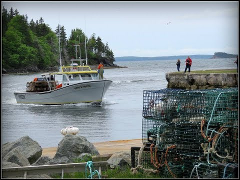 Lobster Fishing Off Cape Breton, NS