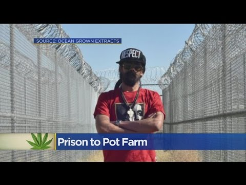 Bob Marley's Son Turning Empty Central California Prison Into Pot Farm
