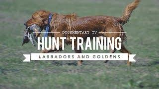 HUNT TRAINING LABRADOR RETRIEVERS AND GOLDEN RETRIEVERS