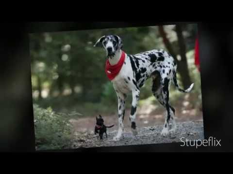 World S Popular Dogs Biggest Strongest Largest Tallest
