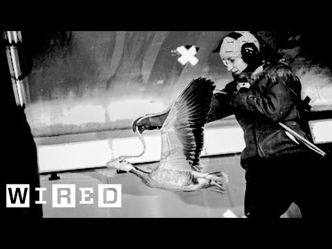 Scientist Explains How to Study High Flying Geese | WIRED