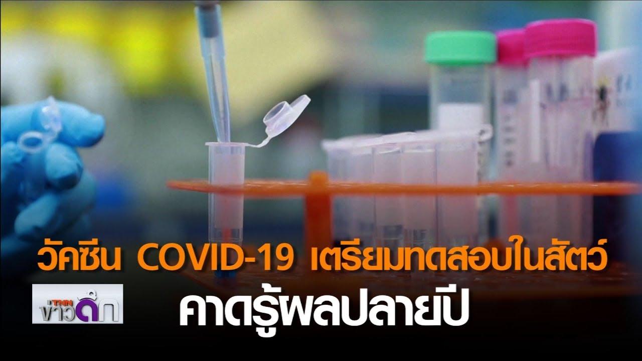 วัคซีน COVID-19 : เตรียมทดสอบในสัตว์-คาดรู้ผลปลายปี  | 17 เม.ย. 63 | TNN ข่าวดึก