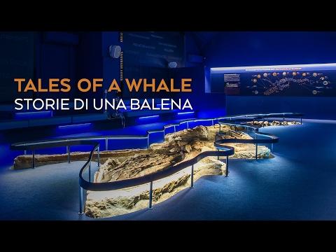Tales of a Whale - Storie di una balena
