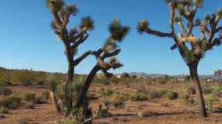 59559 Mesa Drive - Yucca Valley Land