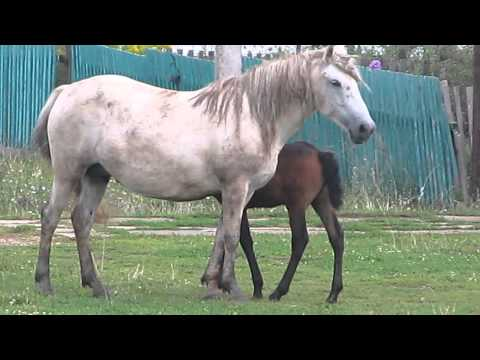 Интересное из мира лошадей: что мы о них знаем