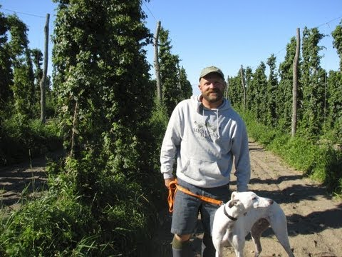 Low-Trellis, Organic Hops Production - Brian Tennis, MI