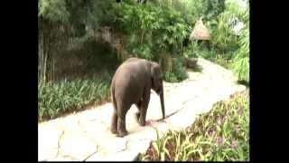 Four Seasons Resort Golden Triangle,Thailand Vacations,Weddings & Honeymoons,Videos