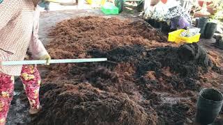 Cách trộn chất trồng sứ đơn giản của vườn Võ Quốc Công