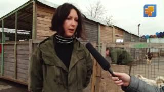 """news #10 Выезд в приют для бездомных животных """"Эко-Бирюлёво"""""""
