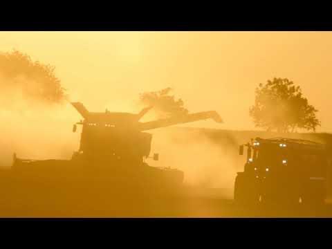 Utisci sa polja: S Serija - pšenica