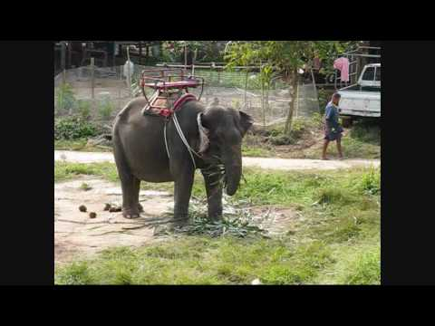 A Taste of Thailand Tour: Phuket – Things to do: Elephant Riding & ATV (Part 5)
