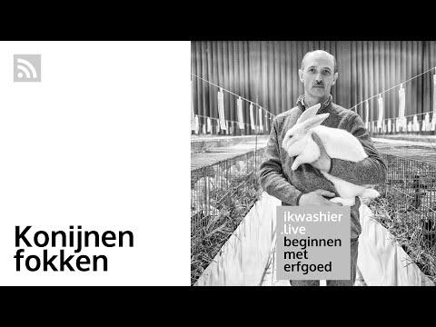 Konijnen fokken met Johan Van Hyfte – Beginnen met erfgoed 126 – ikwashier.live in Sint-Gillis-Waas