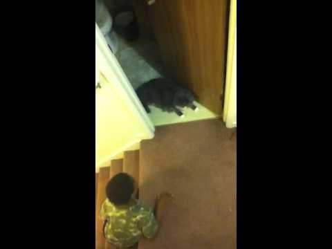 Cat Gets Scared By Little Boy