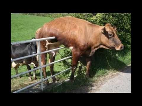 Funny Animal Fails 2017