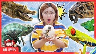 도마뱀이 너무 많아요! ♥ 왕도마뱀 거북이 개구리 양서…