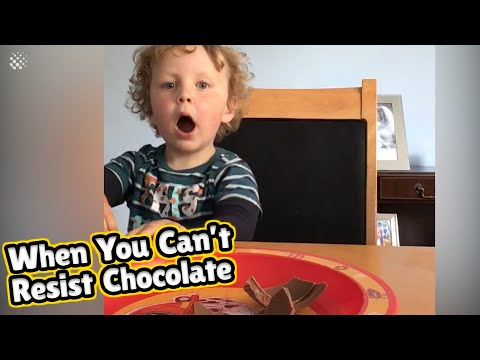 Toddler hilariously fails at resisting a plate of chocolate | Dad Parenting Moments