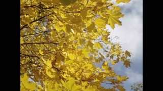 Наша осінь щедра, наша осінь мила!..