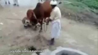 funny arab and pakistani people's moment